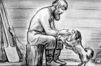 Сочинение по рассказу «Муму» по плану: Чему посвящен рассказ? (И.С. Тургенев)
