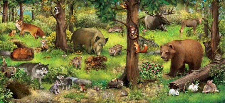 Проблемы и аргументы к сочинению на ЕГЭ по русскому языку на тему: «Животные»