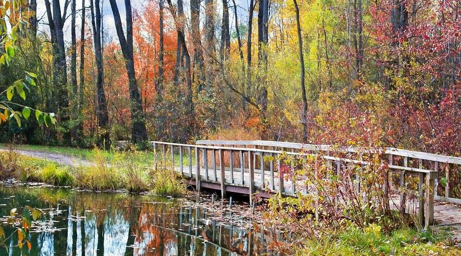 Анализ стихотворения «Осень» (А.С. Пушкин)