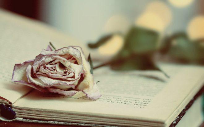 Анализ стихотворения «Цветок» (А.С. Пушкин)