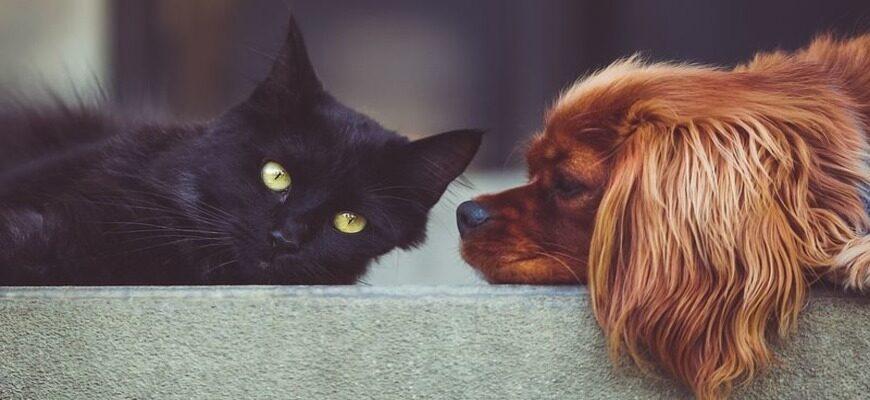 Аргументы из литературы и жизни для сочинения на тему: «Могут ли люди быть друзьями, если они не сходятся во взглядах?»