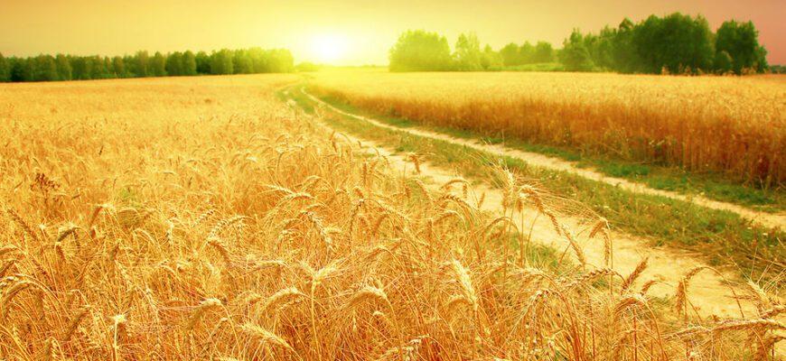 Полный анализ стихотворения «Когда волнуется желтеющая нива» (М. Ю. Лермонтов)