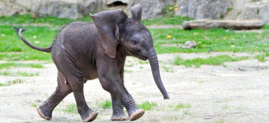 Краткое содержание сказки «Слоненок» (Редьярд Киплинг)