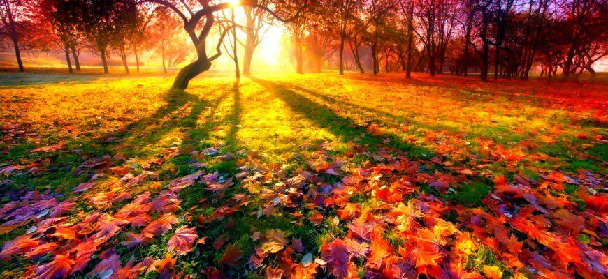 Анализ стихотворения «Осень» (А.А. Фет)